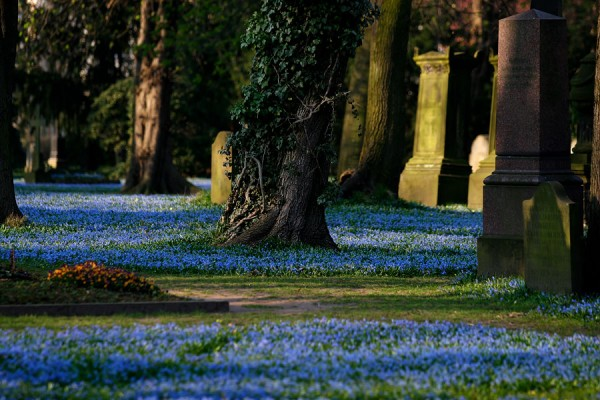 St. Magni-Friedhof Braunschweig